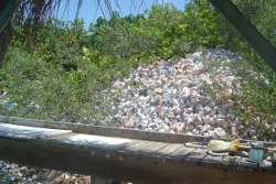 A conch mountain